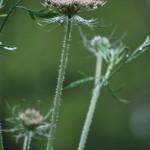 Lobke-Meekes_Floating-Flowers_13